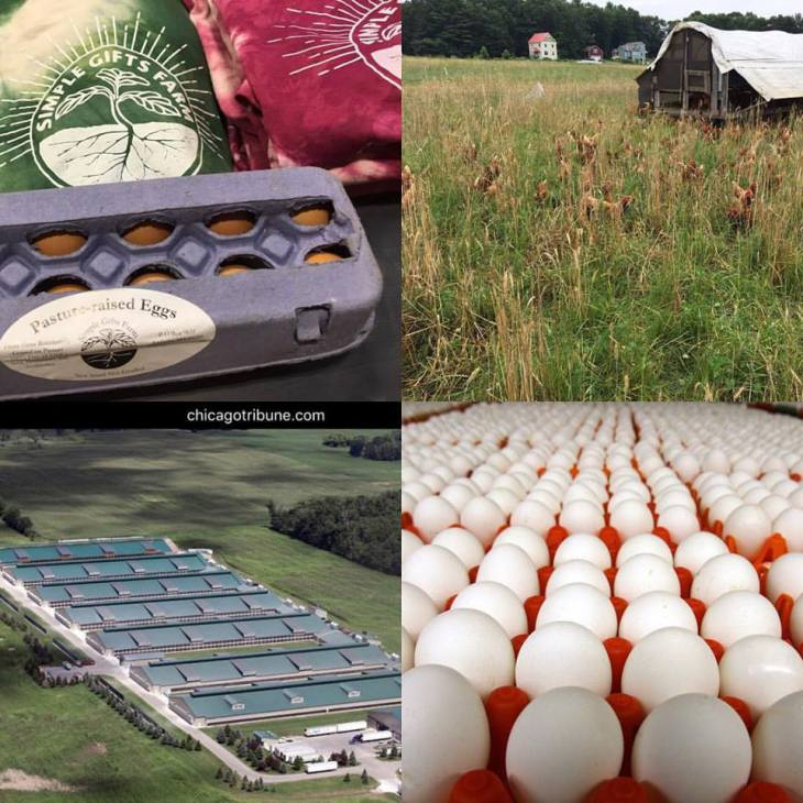 Simple Gifts Farm eggs, hens in the pasture; aerial view of large chicken houses via the Chicago Tribune, eggs in crates (many)