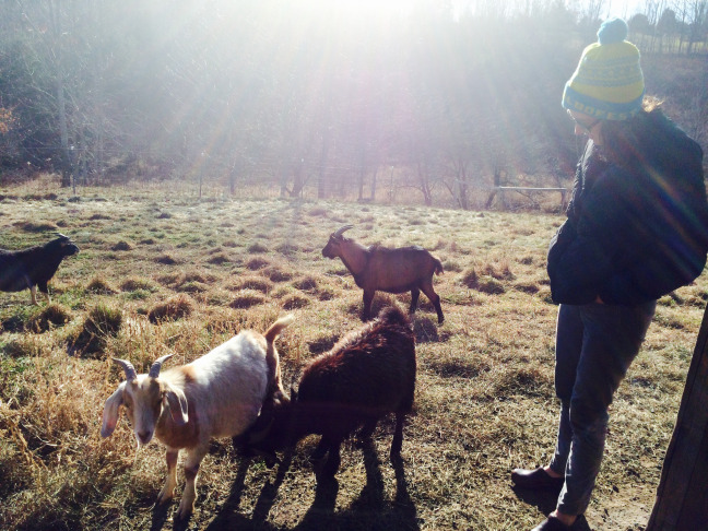 How Vermont Chevon Is Revolutionizing The Goat Meat Industry